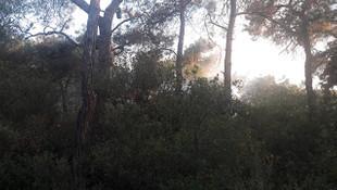 Büyükada'daki orman yangını kontrol altına alındı!