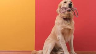Köpeğini araçta bırakıp ölümüne neden olan kadına dava