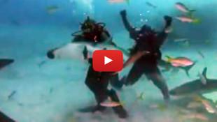 Bu adam çıldırmış! Mike Tyson, denizin altında köpekbalığı ile ringe çıktı!