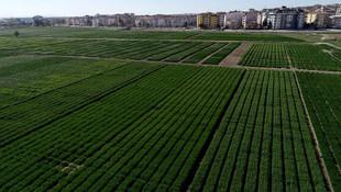 Trakya'daki tarımı alanları yapılaşmaya açılıyor