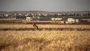 Suriye korkunç infaz! 100 kişiyi mayın tarlasına sürdüler