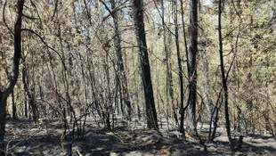Kızılçam ormanı, kömür deposuna döndü!