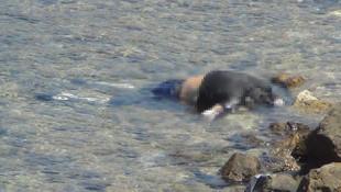 Ayvalık'ta erkek cesedi sahile vurdu