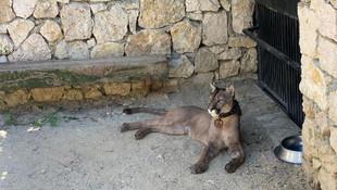 İstanbul'da operasyon: Pumadan, iguanaya çok sayıda hayvan ele geçirildi