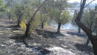 Balıkesir'de zeytinlik alanda yangın