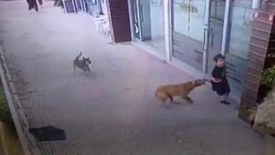 İstanbul'da küçük çocuğa köpek saldırısı kamerada