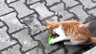 Sevimli hırsız kedi, bakkala girip kedi her gün aynı ürünü alıp kaçıyor