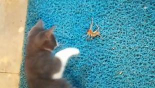 Et yiyen örümcek ile kedinin ölüm kalım savaşı