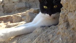 Arkeologların kurtardığı kedi, kazı alanının maskotu oldu