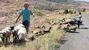 3 dil biliyor! Kariyerini bırakıp köyünde çoban oldu