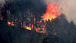Mangal yakmak yasaklanıyor! İçişleri'nden ''Orman Yangınları'' genelgesi!