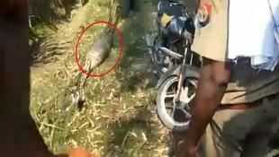 ''Dev yılan bebeği yuttu'' iddiası köyü karıştırdı