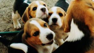 Evcil hayvanı olanlara kritik koronavirüs uyarısı!