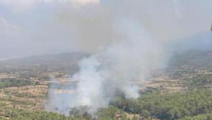 Milas'ta yine orman yangını