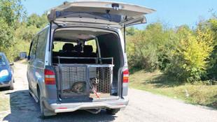 Köpekleri yol kenarına bırakan belediye tespit edildi