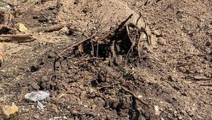 Bursa'da ağaç katliamı! 60 meşe ağacını kesti