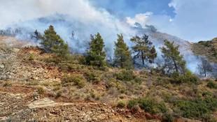 Dalaman'da ormanlık alanda yangın