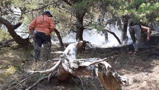Amasya'daki orman yangınıyla ilgili 2 kişi gözaltına alındı