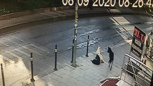 İstanbul'da şehrin ortasında sokak köpeği dehşeti