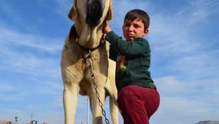 Dünyanın en büyük çoban köpeği