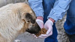 Başkent'te ortak akıl sokak hayvanları için de devrede