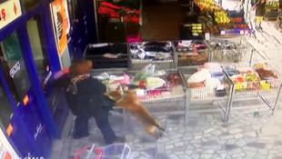 Ankara'da pitbull dehşeti! 2,5 yaşındaki kıza saldırdı