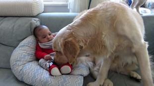 Yeni doğan bebeğin yanından hiç ayrılmıyor