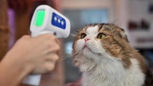 Bilim insanları açıkladı: Evcil hayvanlara da koronavirüs aşısı!