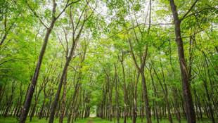 Yönetmelik çıktı; ormanlar imara açılıyor!