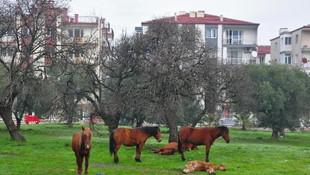 Efsane atlar şehre indi