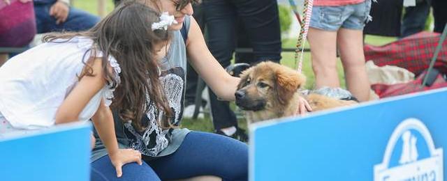 Maltepe'de sokak hayvanları için el ele verildi