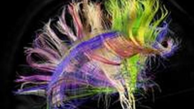 İnsan beyninin 'orkestra şefi' oymuş..