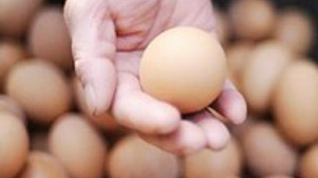 Yumurtaların taze olduğunu nasıl anlarsınız?