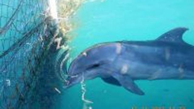 Kaştaki Yunus Parkı Yine Şikayet Edildi