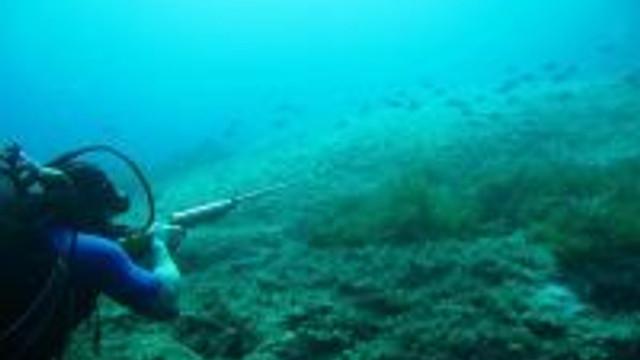 Sad'dan Zıpkınla Balık Avlamayın Uyarısı