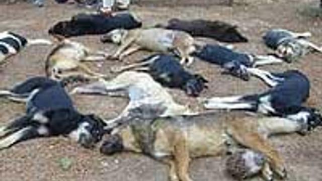 Aşkale'de köpek katliamı