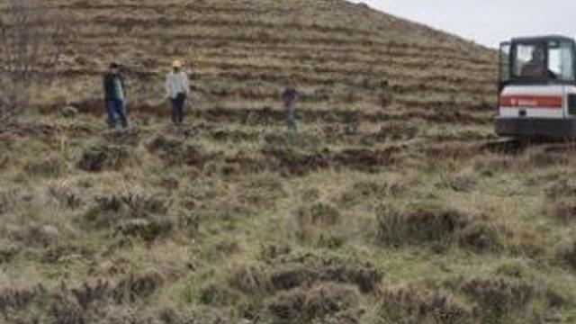 Arguvan'da 250 Kilometrelik Alan Ağaçlandırılıyor