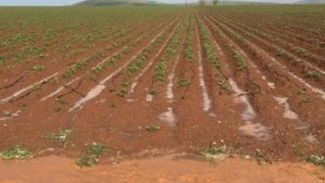Besnili Çiftçileri Dolu Vurdu