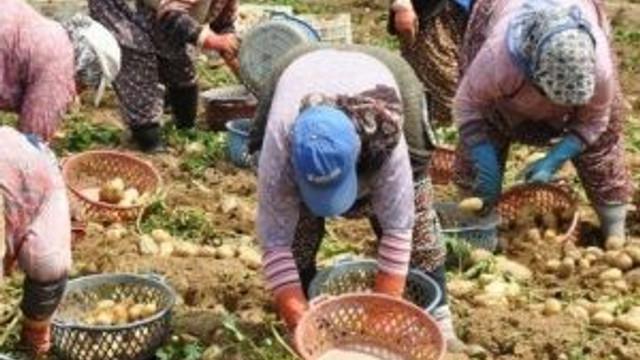 Ödemiş'te Patates Üreticilerine 'Sertifikalı Tohum' Uyarısı