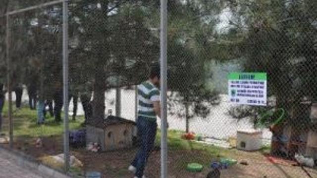 Karabük Üniversitesi'nde Öğrenciler Kedi Bakım Evi Kurdu