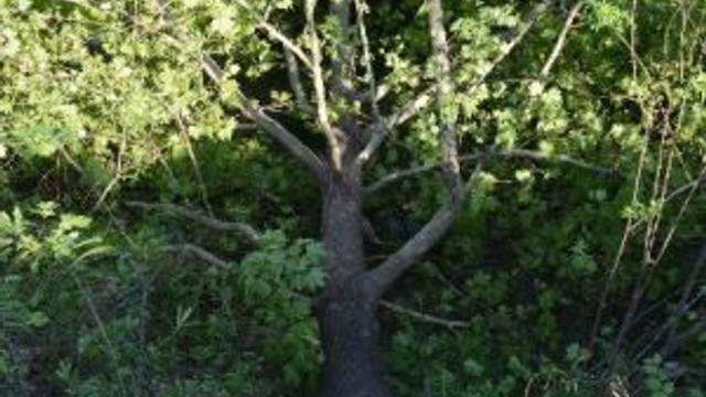 Kaymakam Şimşek Ağaç Kesimini Durdurdu