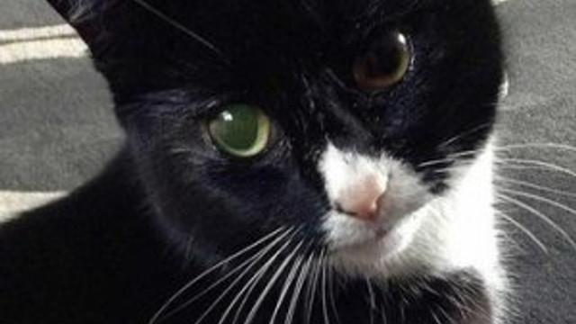 Bu kedi 9 değil, 30 canlı !