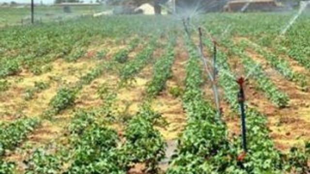 Sayaç takmayan çiftçiler yandı !