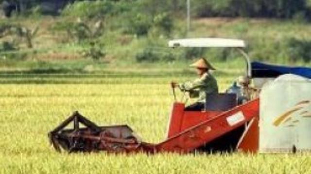 8 bin yıllık pirinç tarlası bulundu