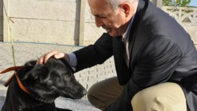 Bakanlık, Büyükçekmece'ye 15 ilçeden köpek döküldüğünü tespit etti