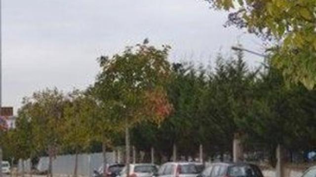 Park için ağaç sökmüştü !