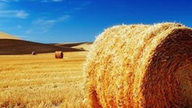 FETÖ imamı samanlıkta yakalandı