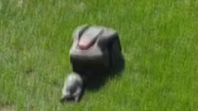 Böyle kaplumbağa görülmedi