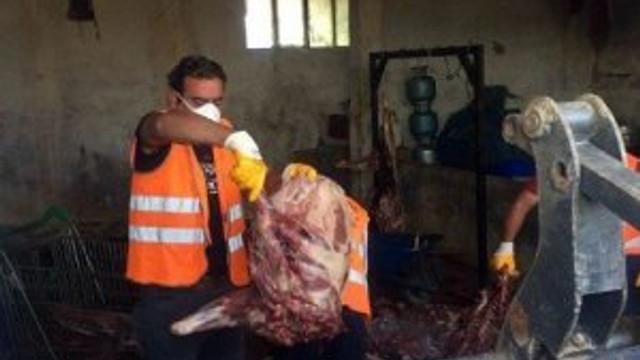 Domuz eti satan kasap yetkilileri göreve çağırdı