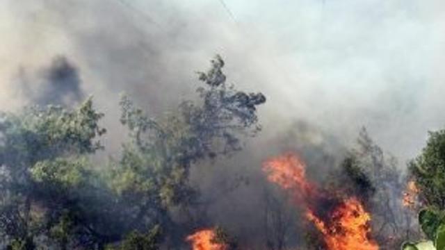 Tatil cennetinde orman yangını